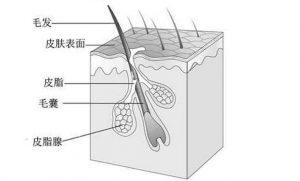 毛孔堵塞是重要的长痘原因之一