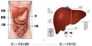 肝脏毒素多还会产生痘痘以外哪些问题?